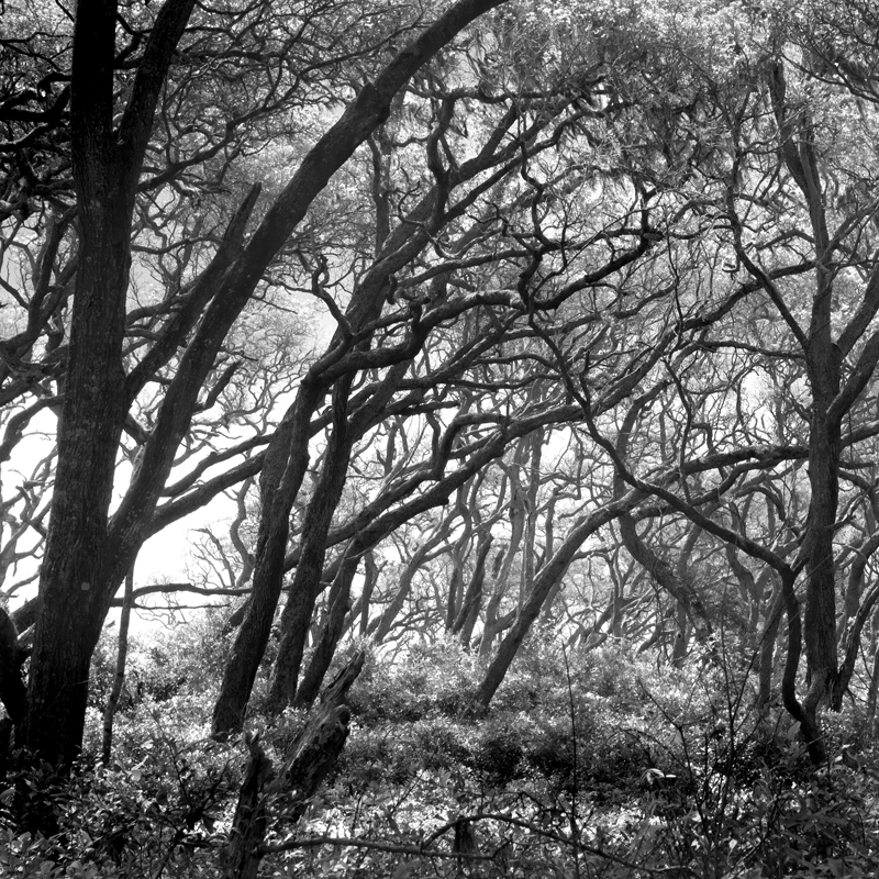 Live Oaks, Big Talbot Island, FL. © Lee Anne White. A camera cannot capture detail in both bright highlights and deep shadows. In order to retain detail in the bright leaves, I allowed some of the tree trunks to go black. Such silhouettes can add drama to an image.