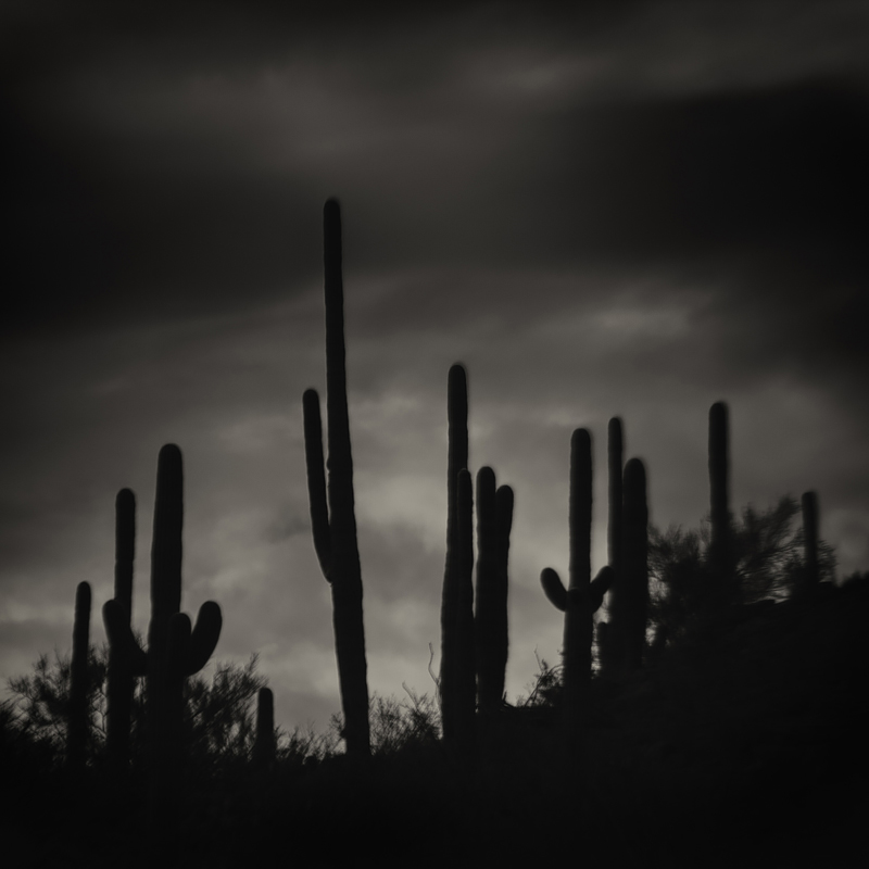 Saguaro National Park, Arizona. Photo ©2014 Lee Anne White.
