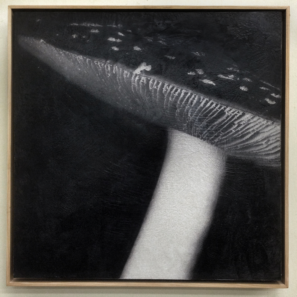 "Amanita muscari. 20""x20"" photo encaustic in natural wood frame."