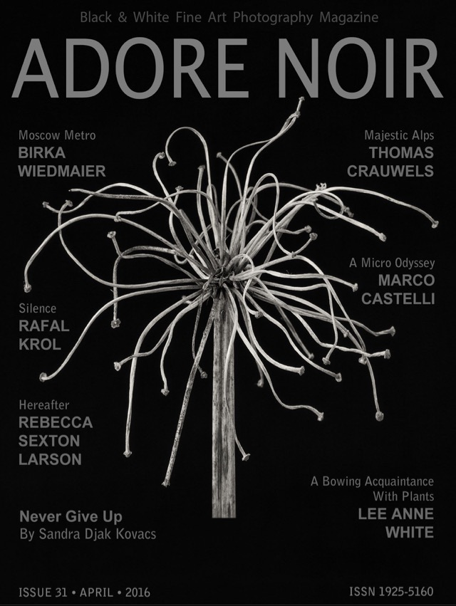 Agapanthus featured on the cover of this month's Adore Noir magazine.