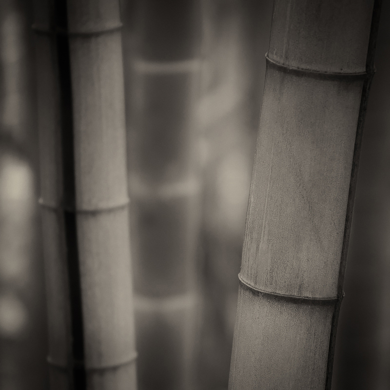 Bamboo. ©Lee Anne White