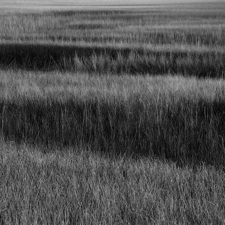 The marsh on Little Talbot Island, Florida.
