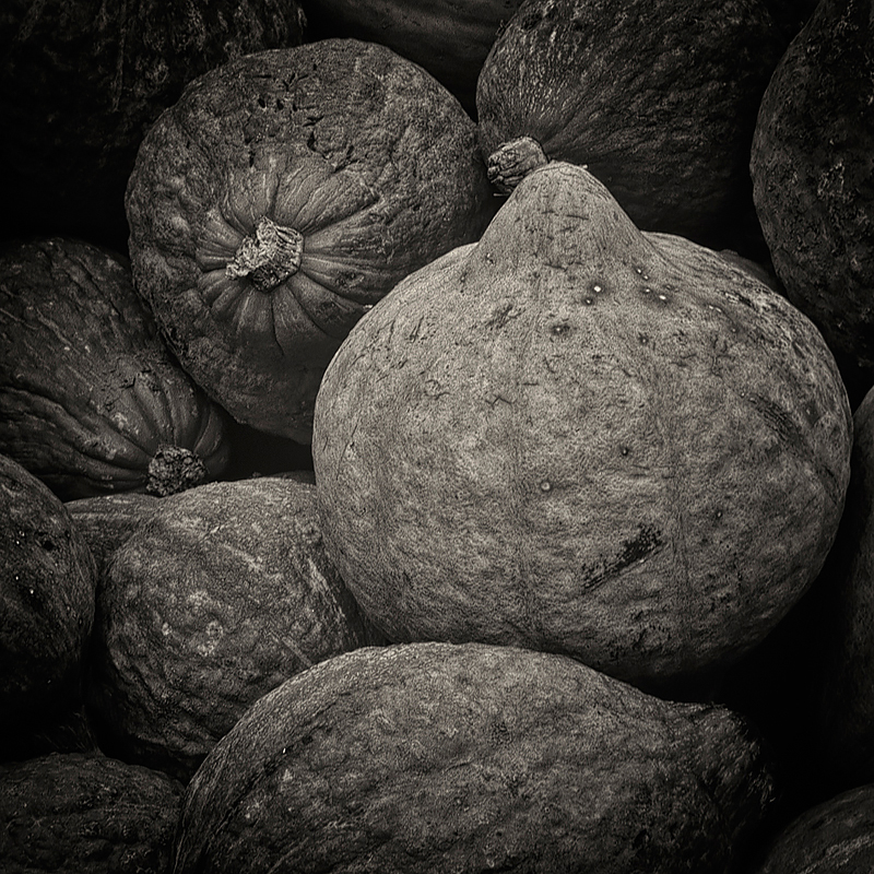 Hubbard squash. ©Lee Anne White.