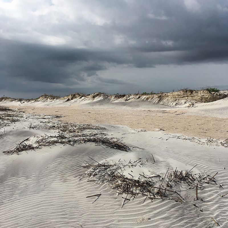 Storm brewing. Little Talbot Island State Park, Florida.  Storms and tides wash in wrack (mostly cordgrass) from the sea. The wrack plays a key role in protecting the shoreline and helps to establish new dunes. Photo   ©2017 Lee Anne White.