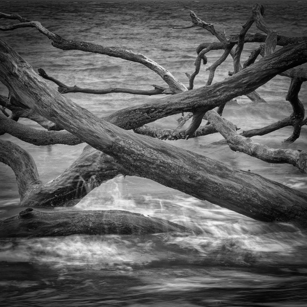 Tumbling Toward the Sea. Big Talbot Island, Florida. As I wrap up one project and move along to the next, I feel a lot like this photo, with ideas crossing paths, tumbling over each other and reaching out in every direction as I search for clarity. Photo ©2017 Lee Anne White.