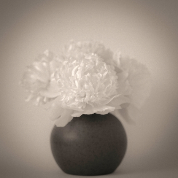 First Peonies. Photo ©2017 Lee Anne White.