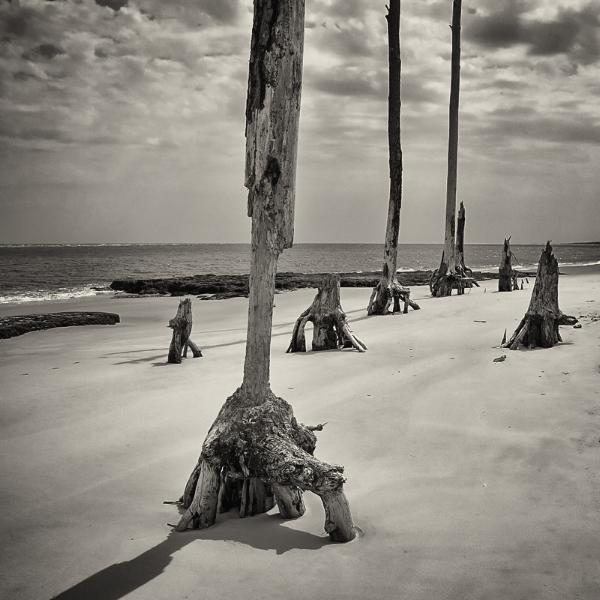 Marching Toward the Sea. Big Talbot Island, FL. ©2017 Lee Anne White.
