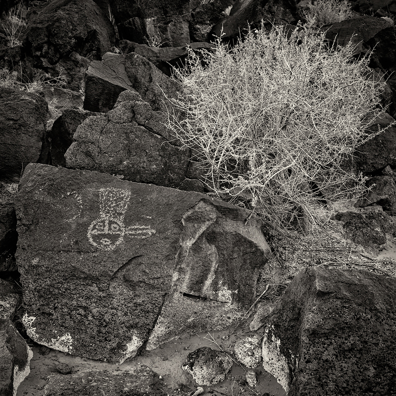 Petroglyph National Monument. Albuquerque, New Mexico. Photo ©2018 Lee Anne White.