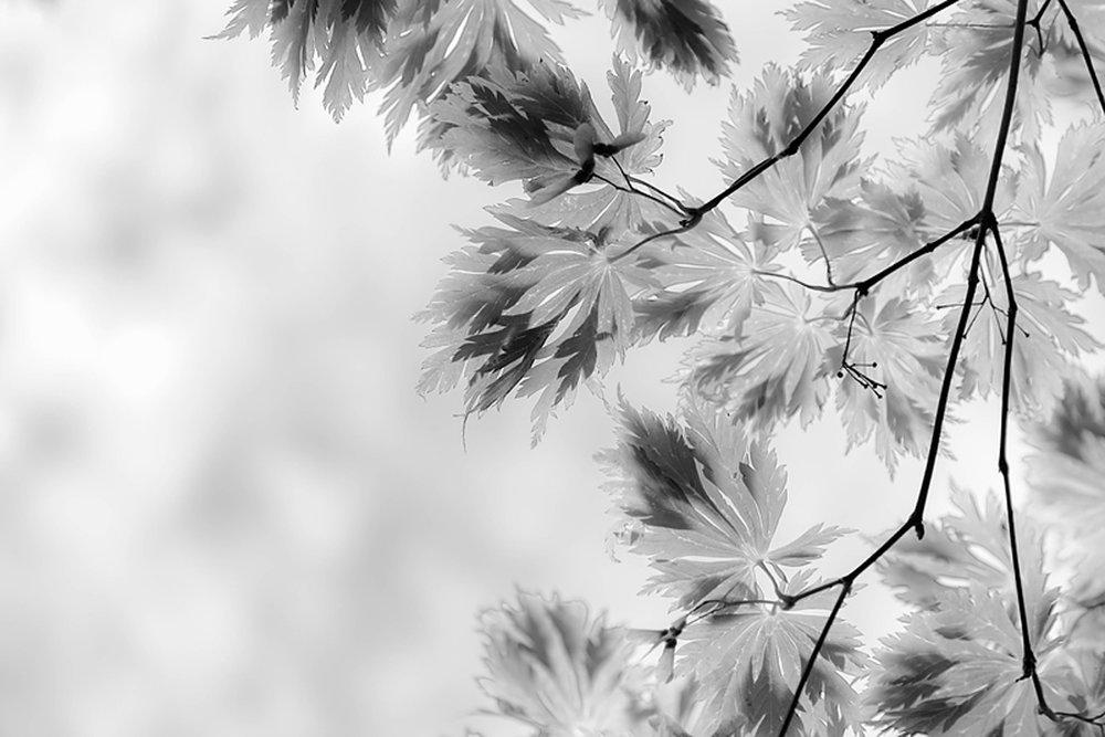 ©Jordana Munk Martin