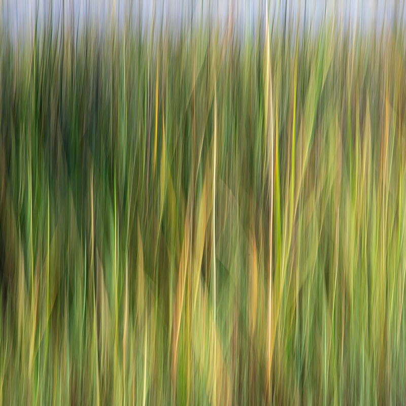 Cordgrass in the marsh. Keeping an emphasis on line, movement and fall color. ©2018 Lee Anne White.