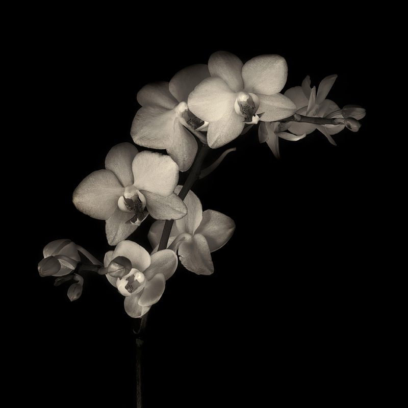 Orchid. Photo 2016 Lee Anne White.