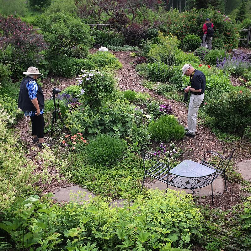 in the wolf garden.jpg