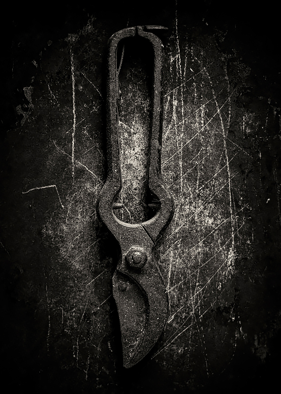 Vintage pruners. ©2019 Lee Anne White.