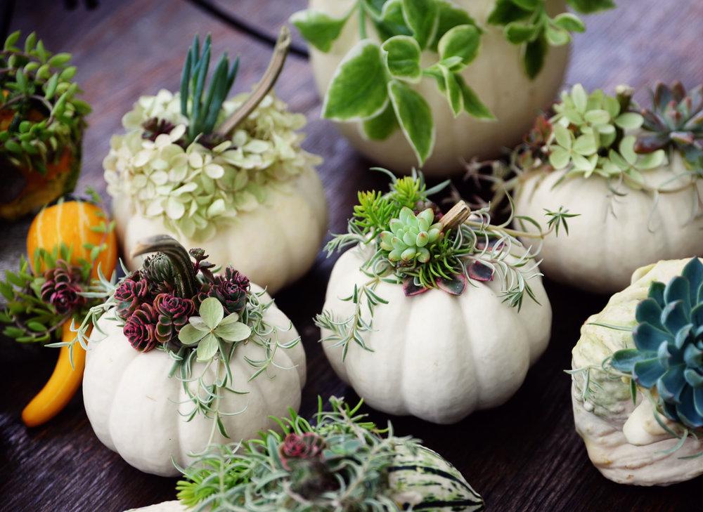 gourds1.jpg