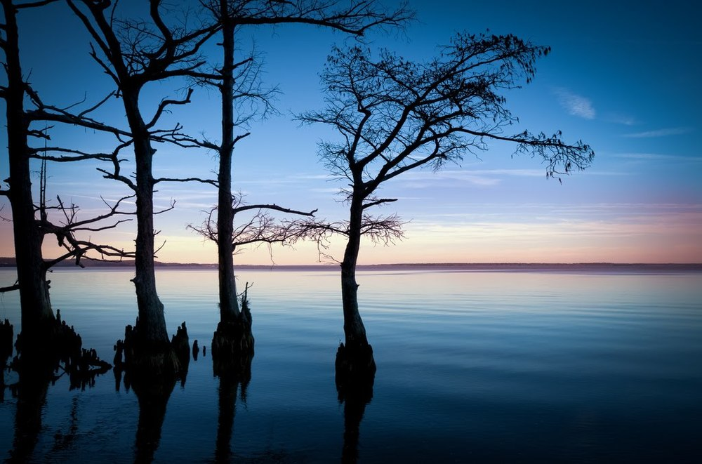 A peaceful shoreline with Cypress trees silhouetted against the late sky.
