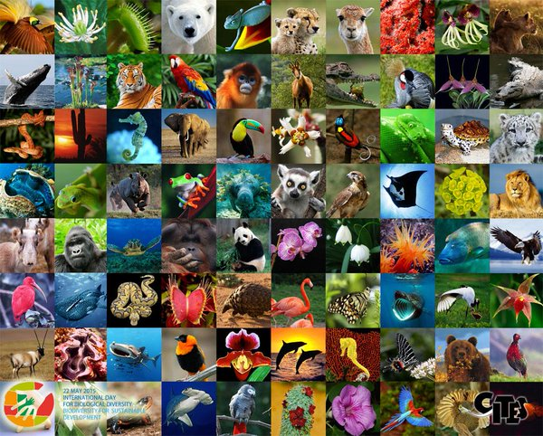 Diversity of the Animal Kingdom