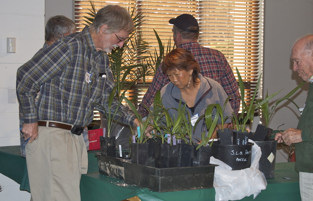 Examining plants prior to the auction.