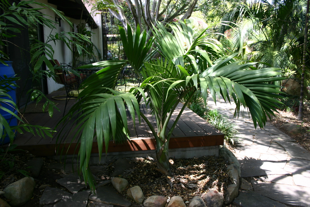 IMG_1162 awesome palm.JPG
