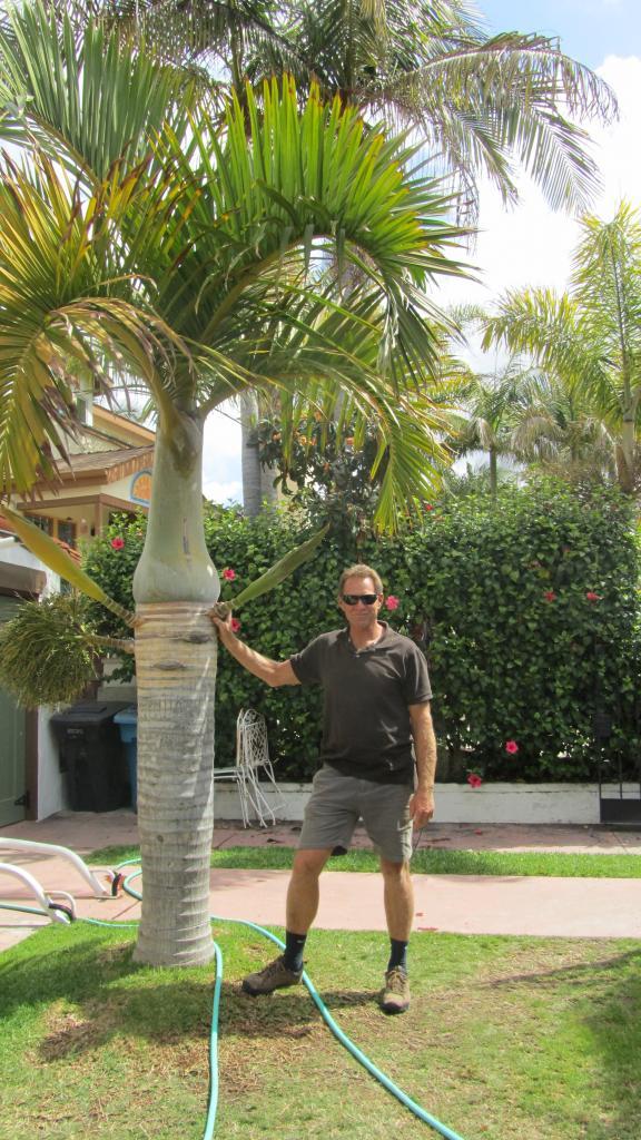 Robert de Jong lends scale to Rick Luna's magnificent Hyophorbe verschaffeltii