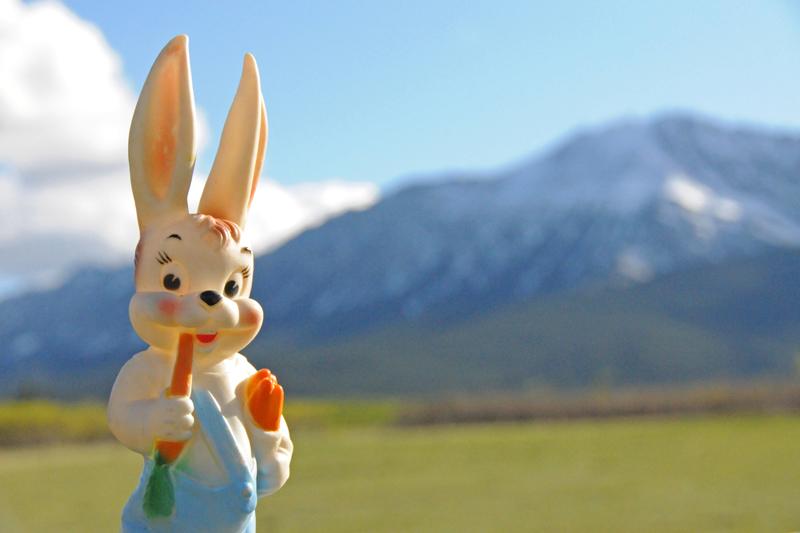 Cowboy Trail Bunny.jpg