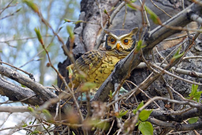 Owl Tree.jpg