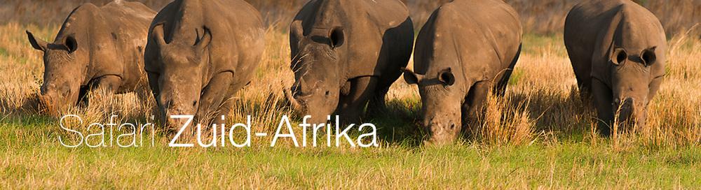 foto avontuur en safari op locatie in zuid afrika \u2014 welmanstudiofotosafari zuid afrika wildlife, big 5, cultuur en natuur fotografie workshops en excursies volledig verzorgd in luxe lodges in limpopo province