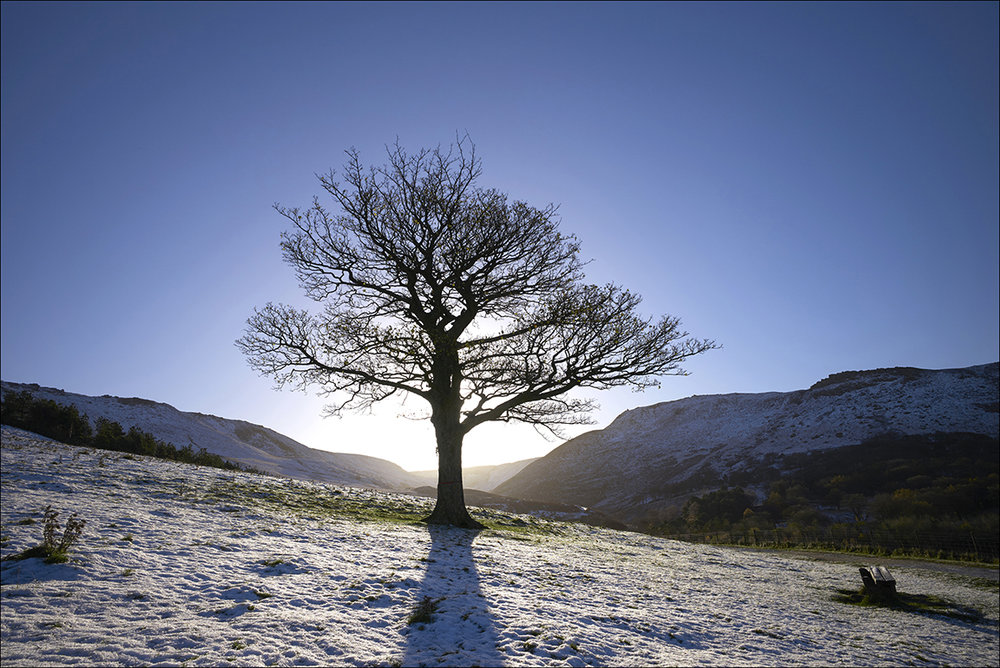 The Dove Stone Tree