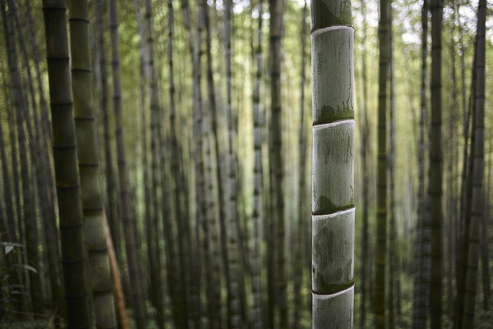 Shunan Bamboo Forest - China