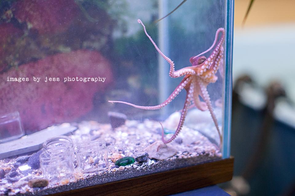 Octopus 2 Resized.jpg