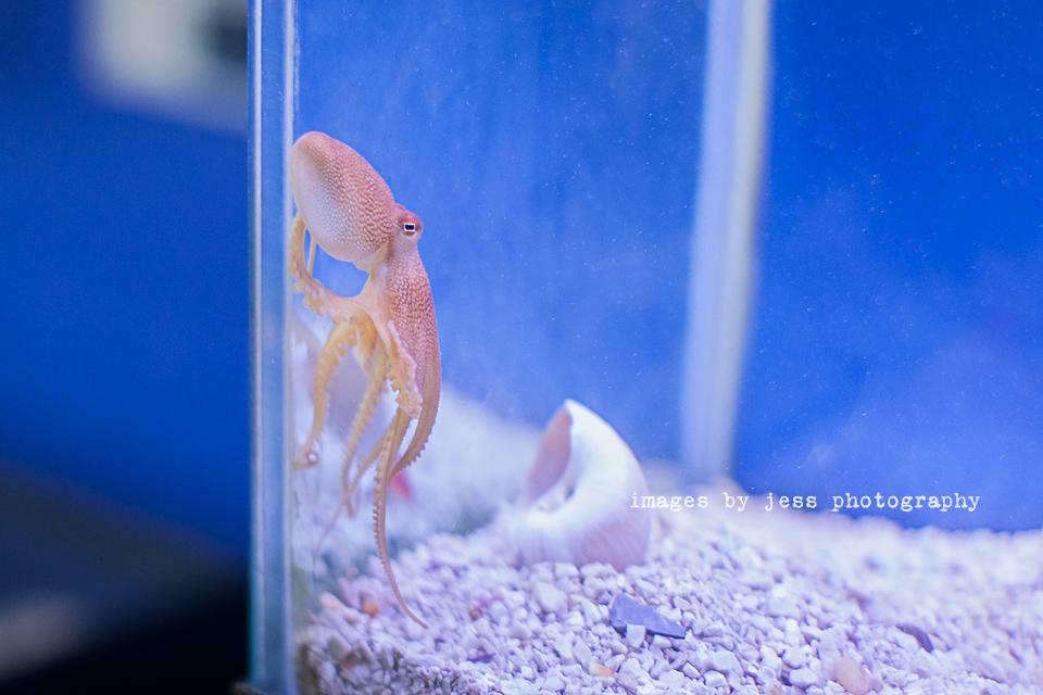 Octopus 4 Resized.jpg