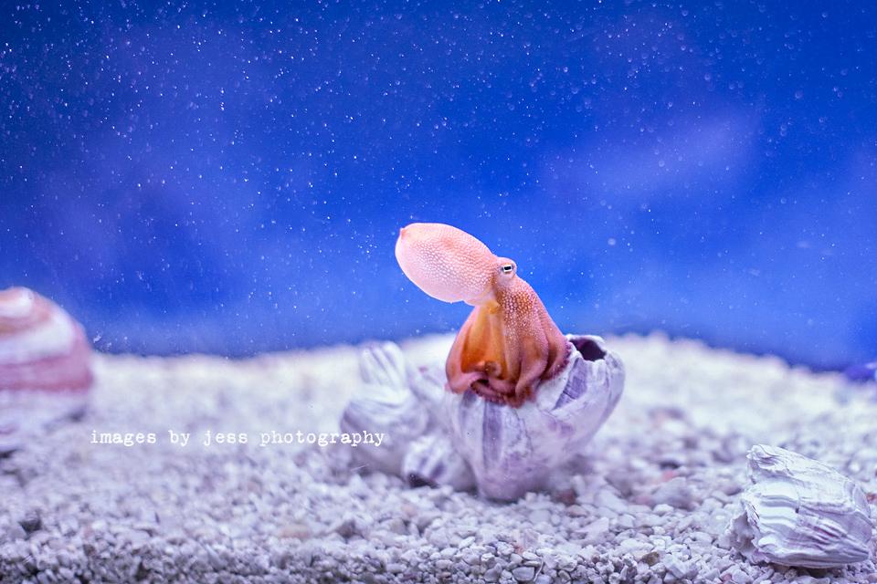 Octopus 3 Resized.jpg