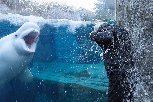Funniest wedding moment for 2017 at Mystic Aquarium! @2lessfishevents