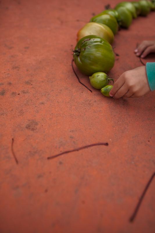 Kiran, line of tomatoes. November, 2011.