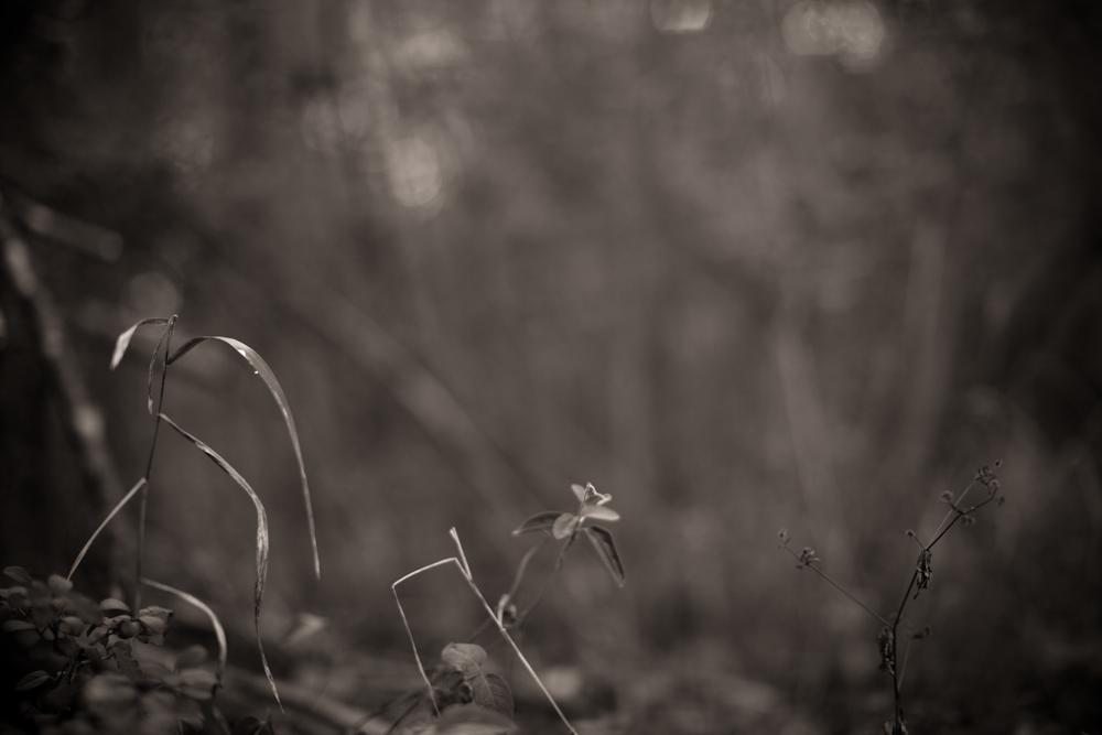 Grass, Three.