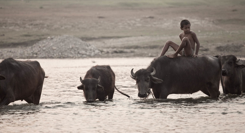 Cowboy-cow-heard-ride-river-crossing-local-village-boy-nepalese-chitwan-national-park-nepal-asia-travel