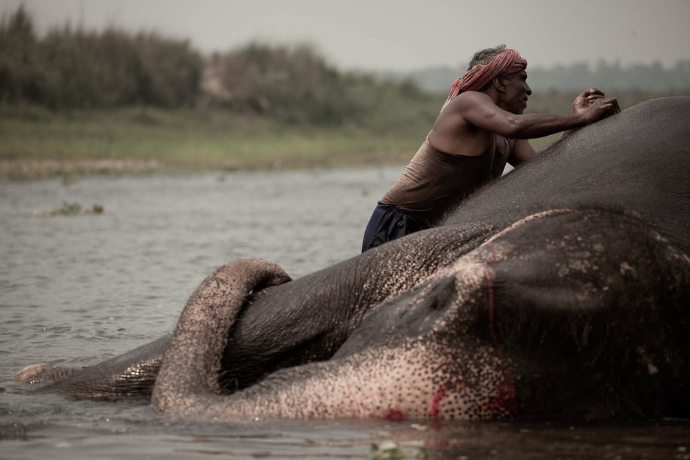 mahoot-elephant-bath-care-clean-local-chitwan-national-park-nepal-asia-travel