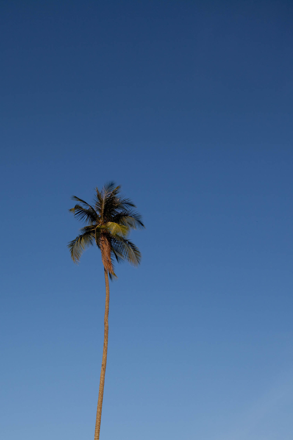 Palm-tree-blue-skies-perhentian-islands-malaysia-asia-travel