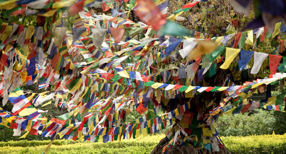 tree-prayer-flags-lumbini-nepal-asia-travel