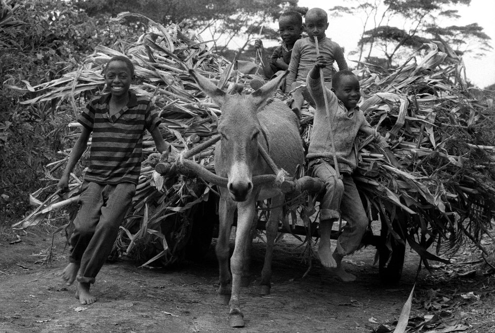 Kikuyu boys with donkey cart