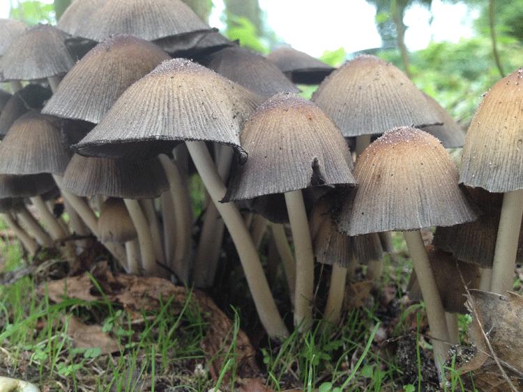paddenstoelen.png