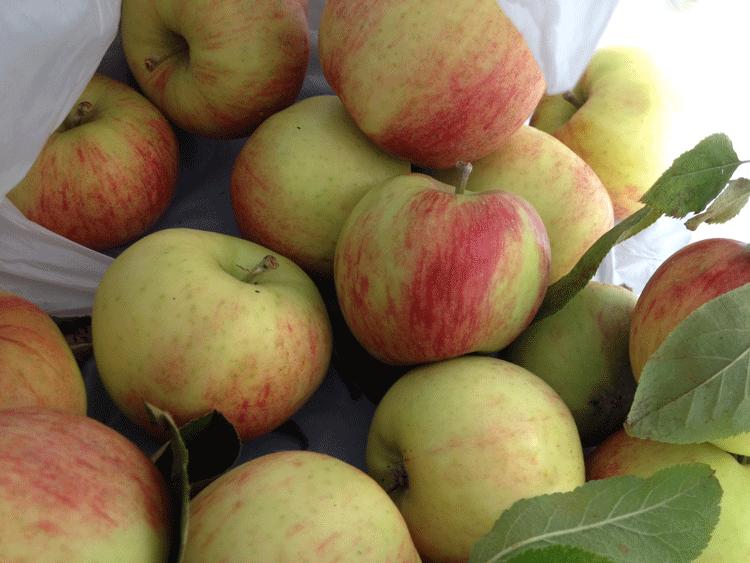 appels.png