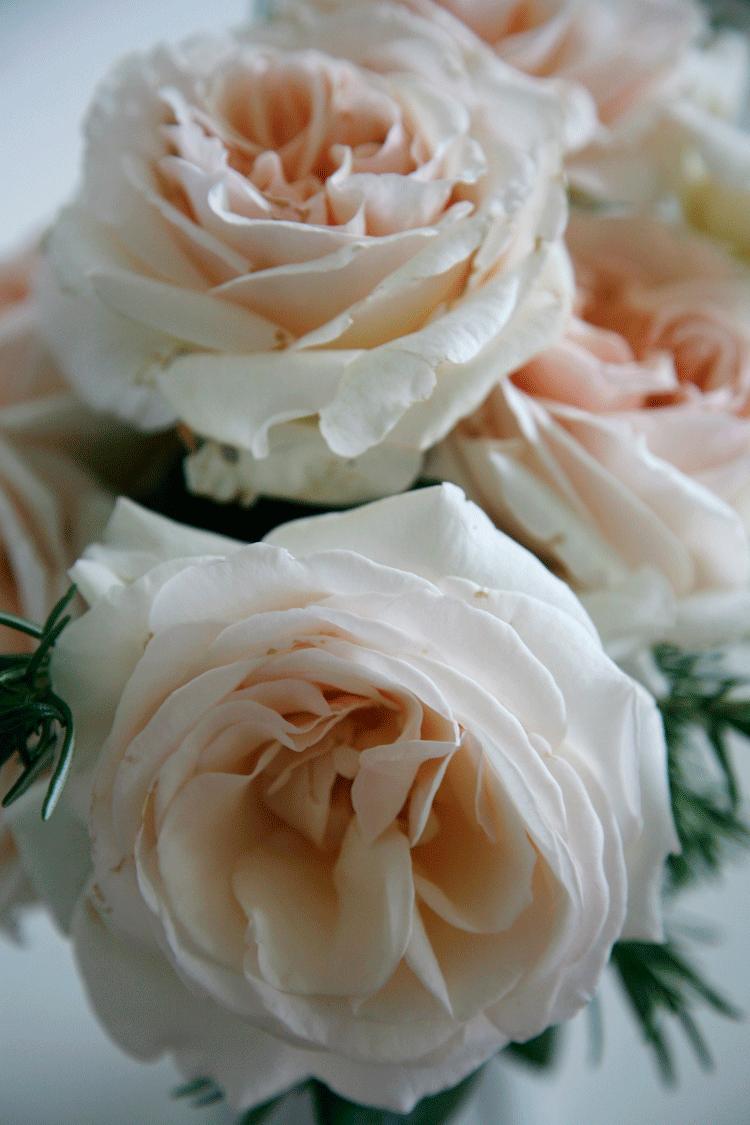 rozen_rozemarijn