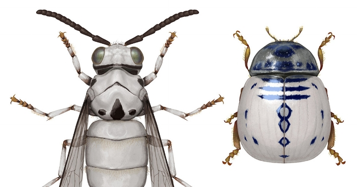 Star Wars Themed Bugs