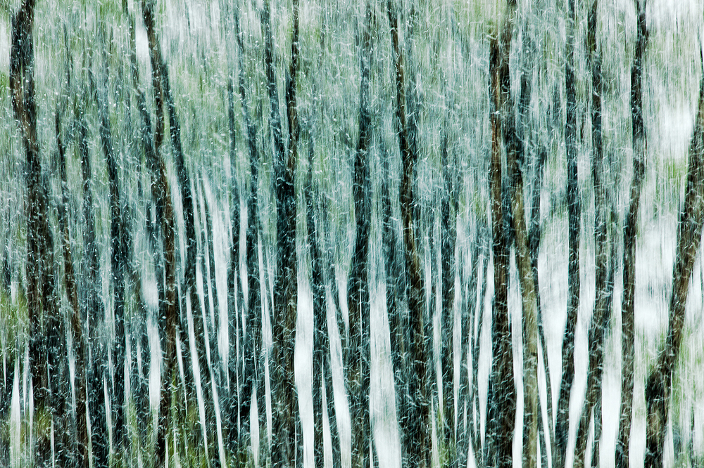 I purposely used a slow shutter speed, small aperture, and slid my camera down as I photographed this row of trees in the midst of falling snow near Havre, Montana. → Buy This Print