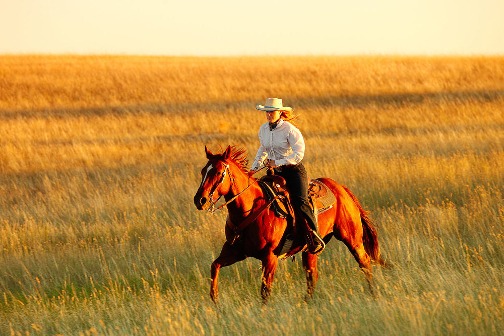 A cowgirl rides fast across an open Montana plains west of Havre, Montana. → License Photo