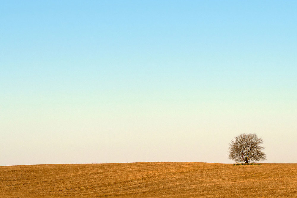 A lone, leafless tree stands tall in an otherwise featureless field.   → Buy a Print