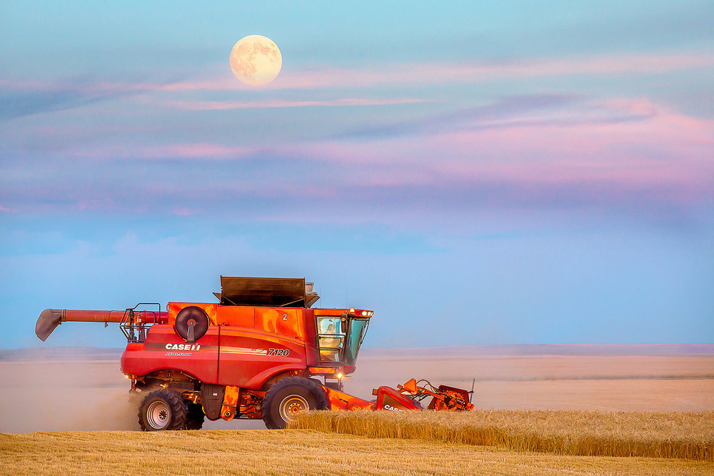 The Super Moon rises over the wheat fields as farmers work late cutting wheat north of Havre, Montana.   → Buy a Print
