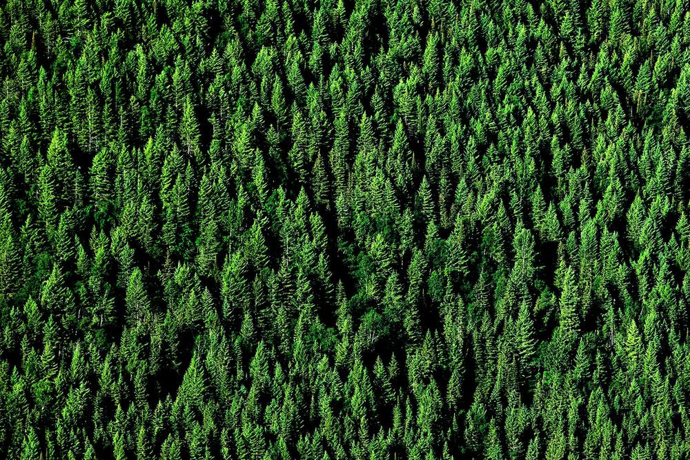 Carpet of Trees