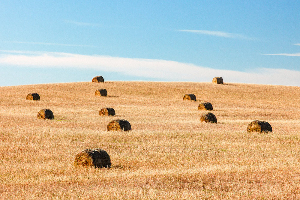 Scattered Bales