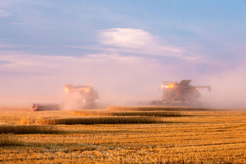 Harvestor in Magenta Cloud